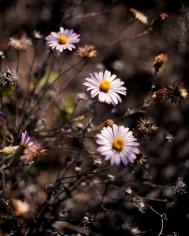 california_flowers_by_madelynne_nehl_01