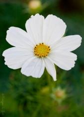 california_flowers_by_madelynne_nehl_02