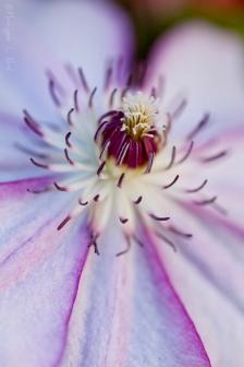 california_flowers_by_madelynne_nehl_06