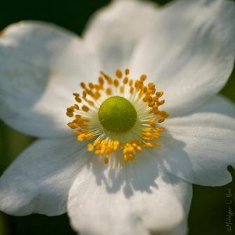 california_flowers_by_madelynne_nehl_08