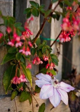 california_flowers_by_madelynne_nehl_15
