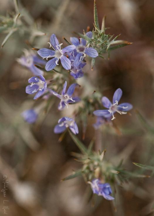 california_flowers_by_madelynne_nehl_19