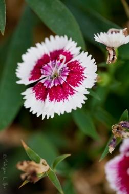 california_flowers_by_madelynne_nehl_21