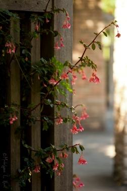 california_flowers_by_madelynne_nehl_23