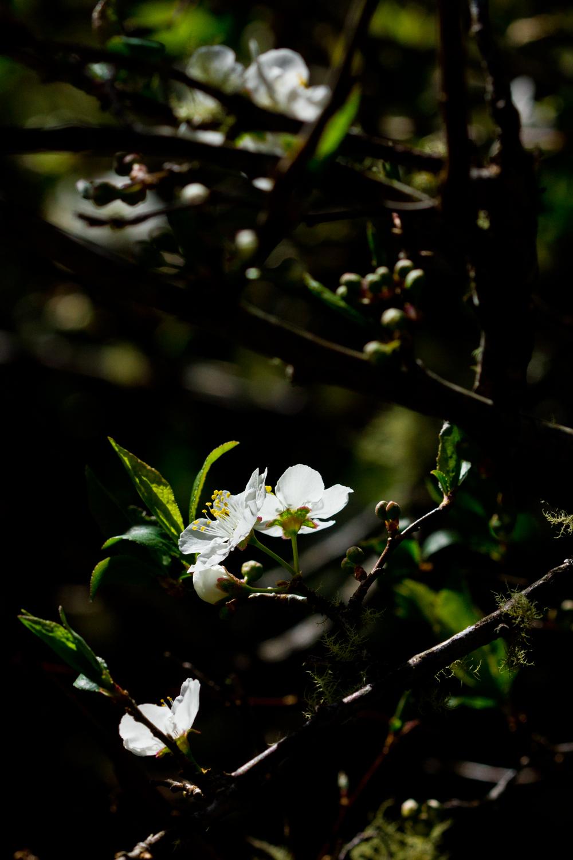madelynne-nehl-photography-haleakala-008