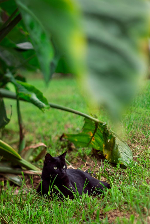 Maui-Cats-Madelynne-L-Nehl-0001