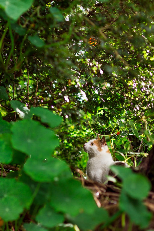 Maui-Cats-Madelynne-L-Nehl-0002