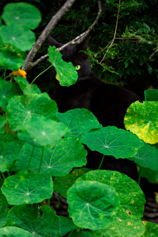 Maui-Cats-Madelynne-L-Nehl-0003