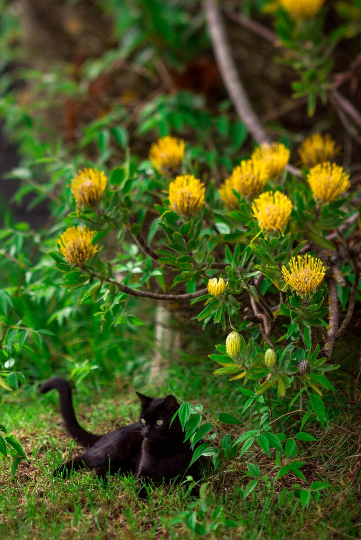 Maui-Cats-Madelynne-L-Nehl-0004