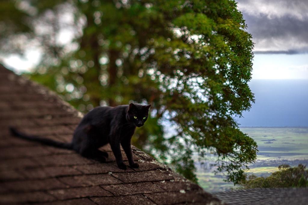 Maui-Cats-Madelynne-L-Nehl-0005