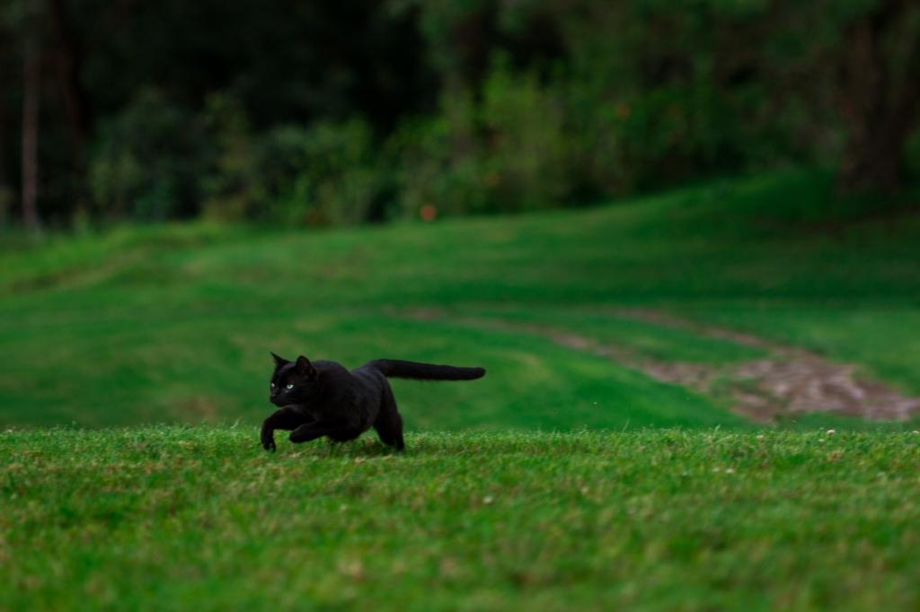 Maui-Cats-Madelynne-L-Nehl-0007