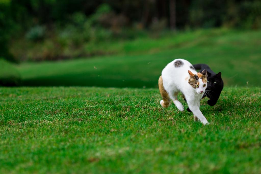 Maui-Cats-Madelynne-L-Nehl-0008